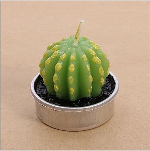 vela cactus